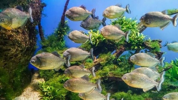 白池地獄の熱帯魚館はミスマッチ?